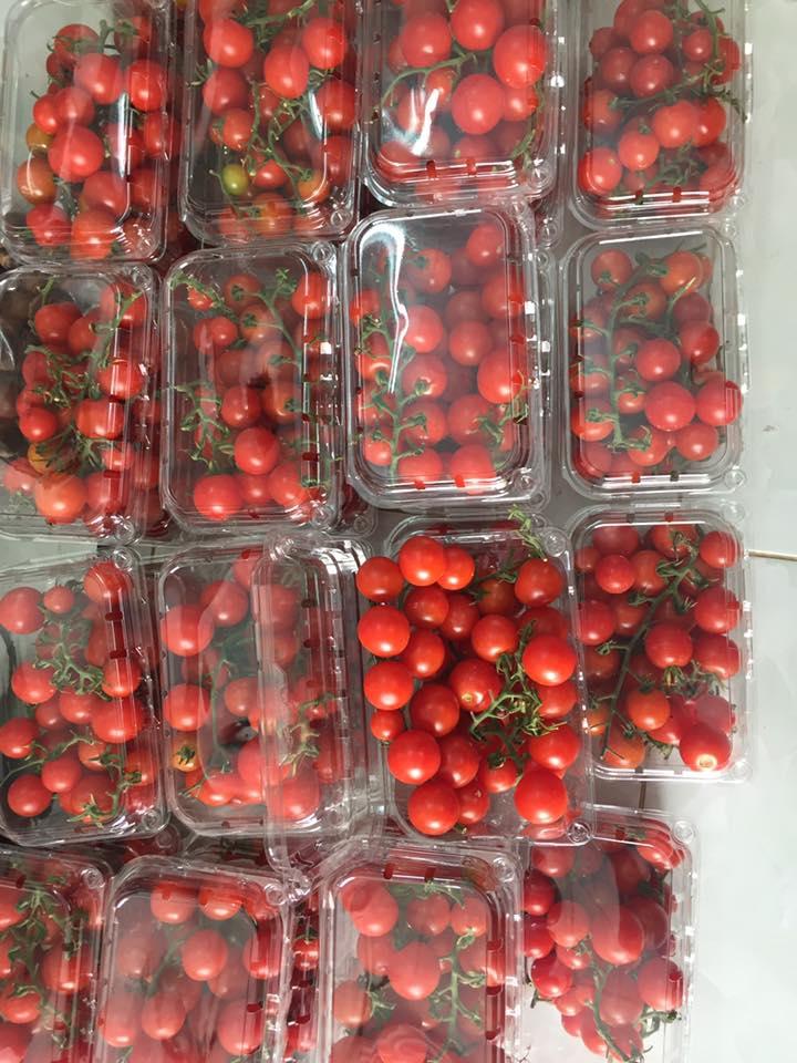 hộp hựa đựng cà chua baby