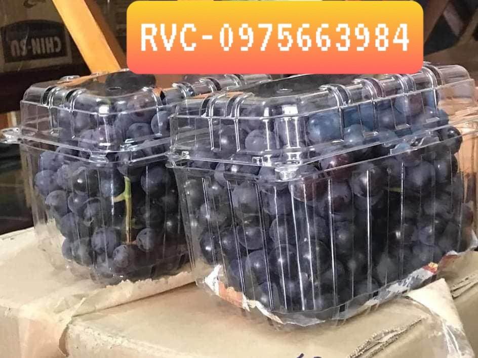 hộp nhựa đựng trái cây tươi