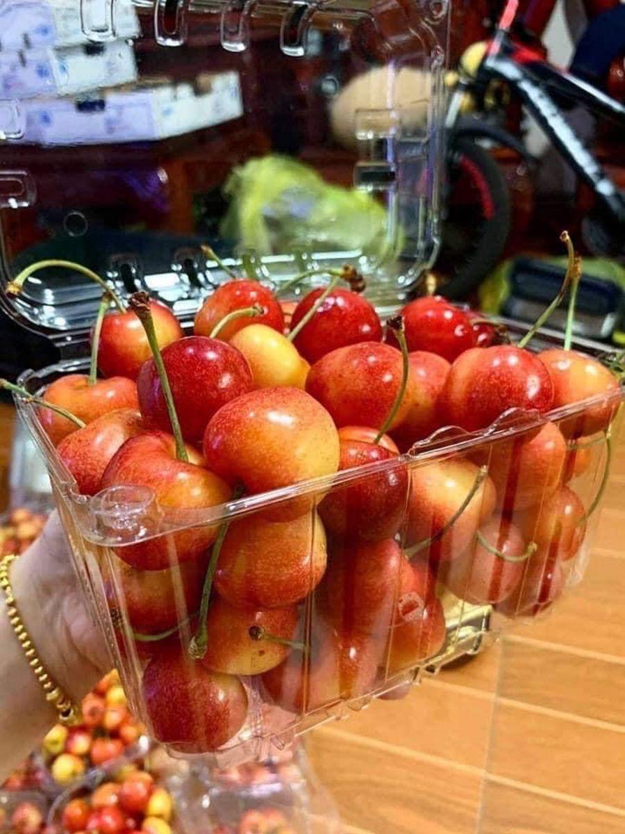 hộp nhựa đựng trái cây 1 kg tại hồ chí minh