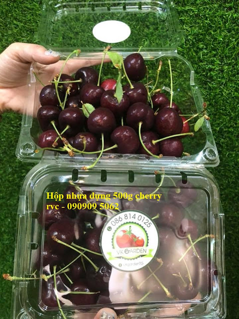 hộp nhựa trái cây đẹp