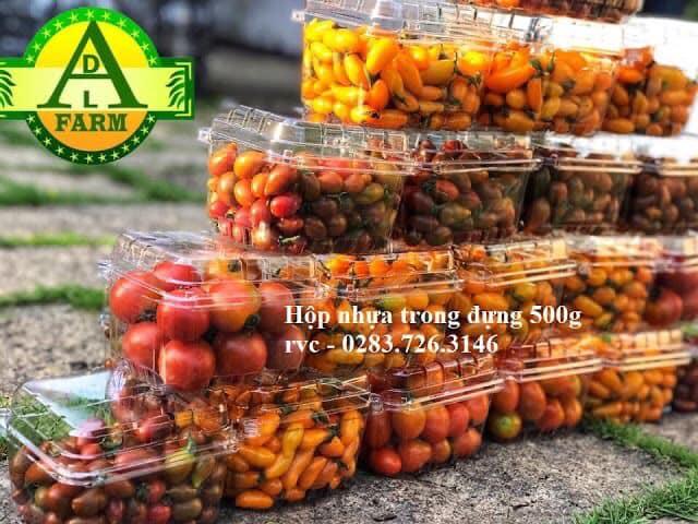 mau hộp nhựa đựng trái cây tphcm